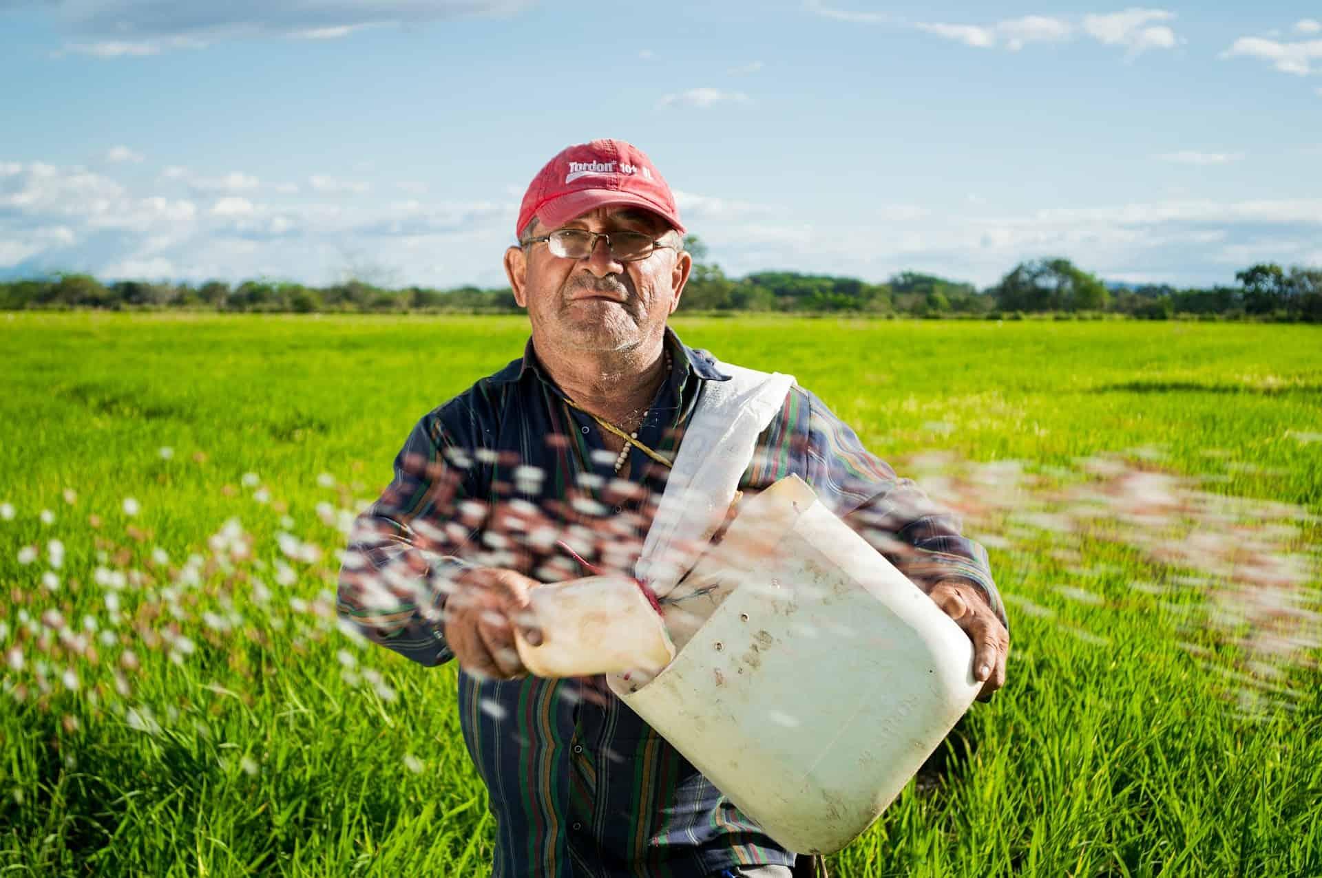 Reissorten für den Reiskocher-reisland